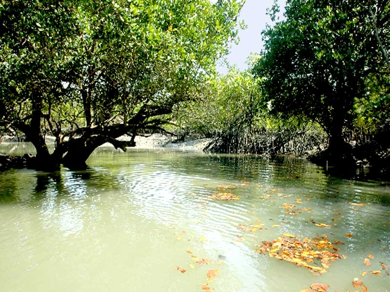 Sundarban-Tree-and-River
