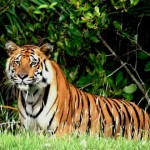 Sundarban National Park