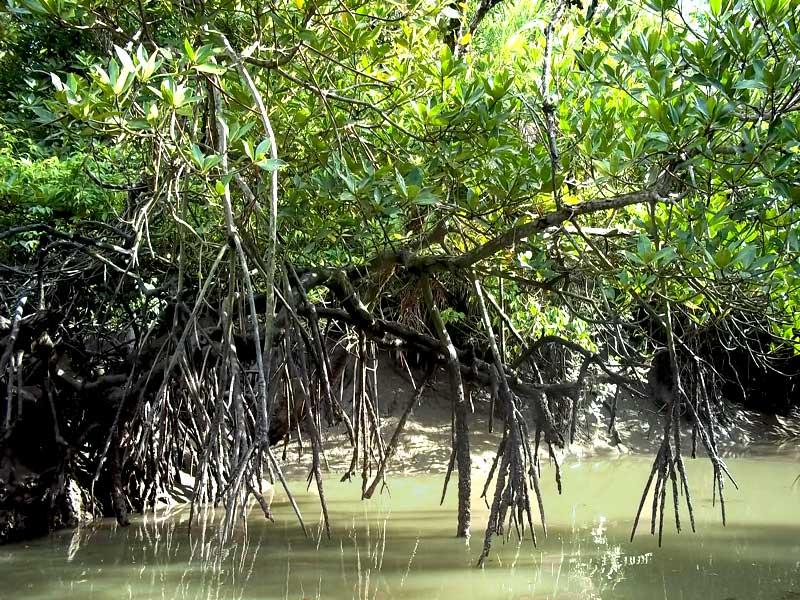 Sundarban-View