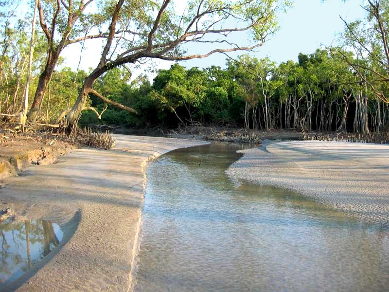 river of Sundarban
