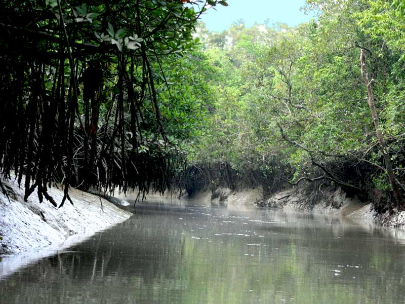 river of Sundarban forest