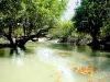 Sundarban-Tree-and-River