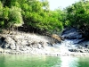 Sundarbans river and forest