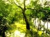 Sundarban tree river and forest